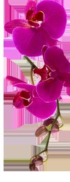 Ilustracja Kwiat